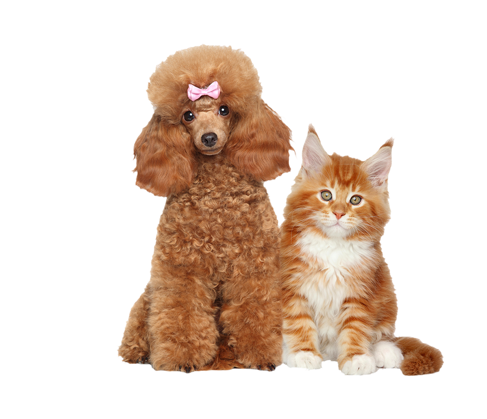 Professional Pet Styling for Fluffy Pets